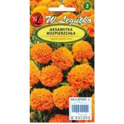 Gvazdikiniai serenčiai Orange