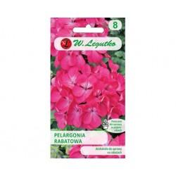 Darželinė Pelargonija Gama...